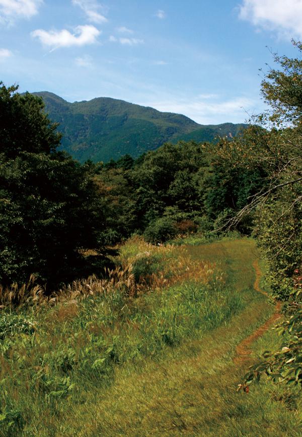 浅間山 山頂は唯一上空が開けた平坦地。西側には神山や駒ヶ岳が見られる