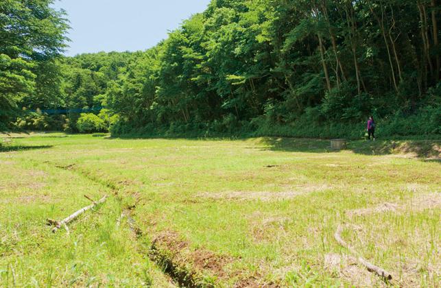 こちらの休耕地は現在、恵泉女学園大学と組んで開墾中