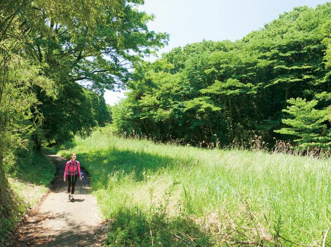 今は休耕地となった明るい谷戸を歩く