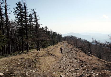 雲取山 稜線に出ると視界が広がり、気持ちがよい