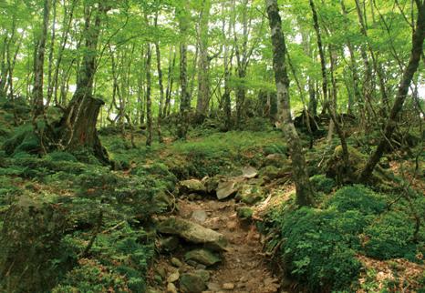 八経ヶ岳 奥駈道は樹林も豊か。弁天ノ森付近はうっそうとしている