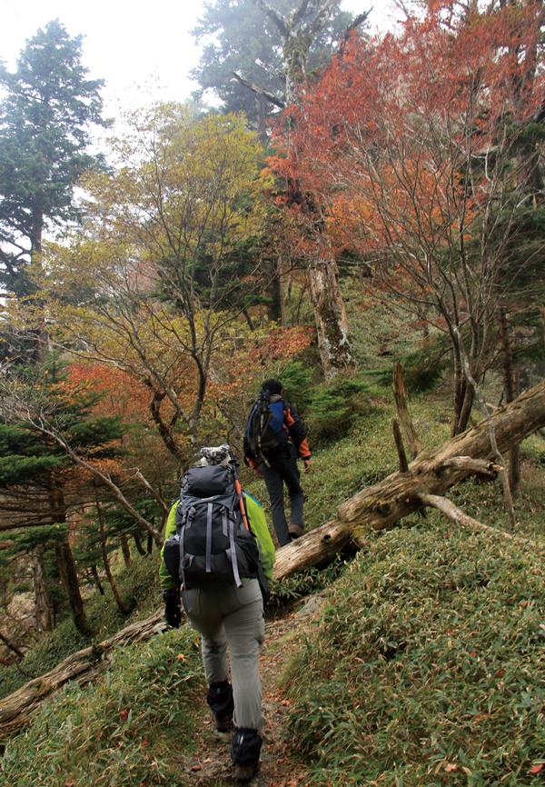 大普賢岳 日本岳のコルから紅葉の尾根伝いに大普賢岳をめざす