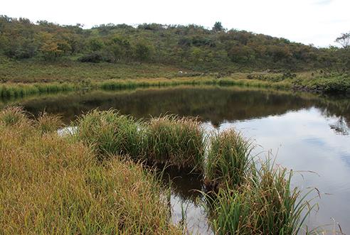権現山(ごんげんやま)・ホッケ山 道中で楽しめる小女郎ヶ池。秋の草紅葉も美しい