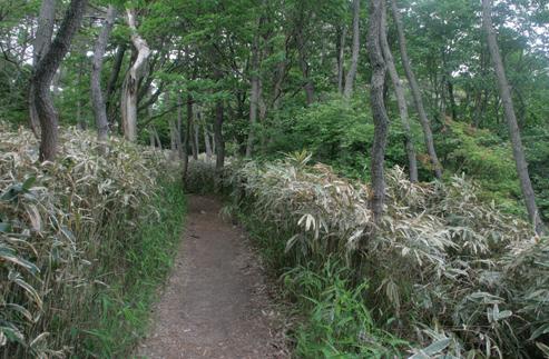 東六甲縦走路 東縦走路は歩きやすい道が緩やかに下っていく