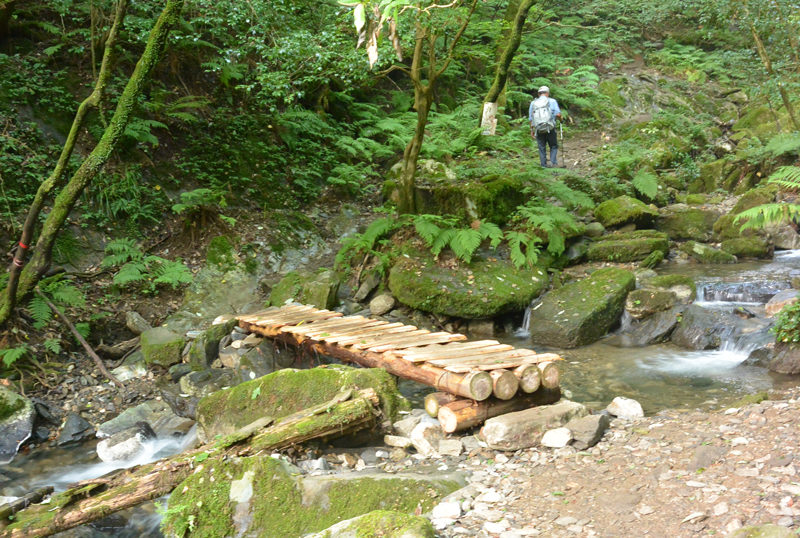 井原山  いくつか木橋を渡って水無谷を詰める