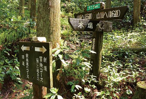 虚空蔵山 木場登山口から登って出合う新道分岐