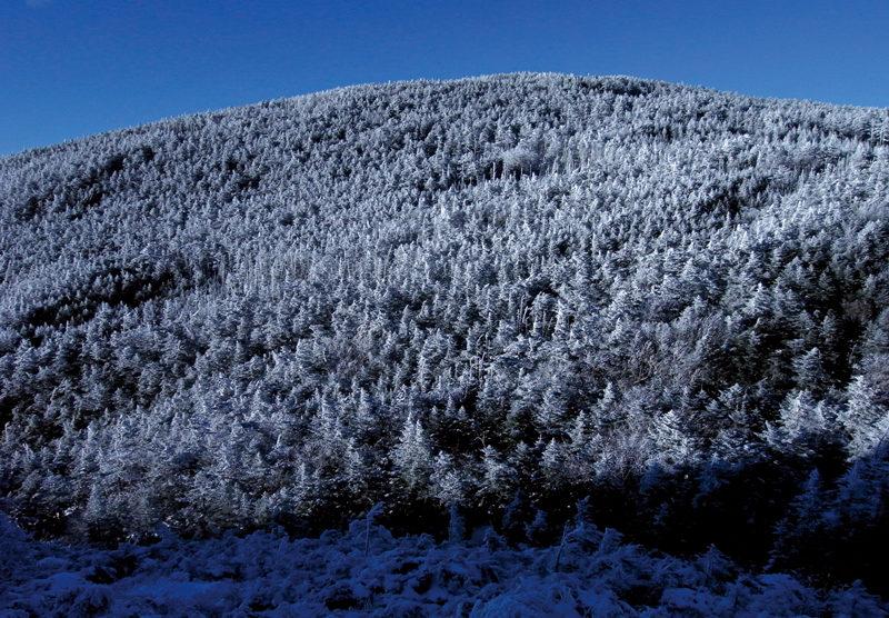 黒百合平 雪の針葉樹が印象的。冬の森歩きを楽しもう