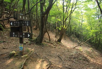 リトル比良  指導標や登山道は整備されており、歩きやすい