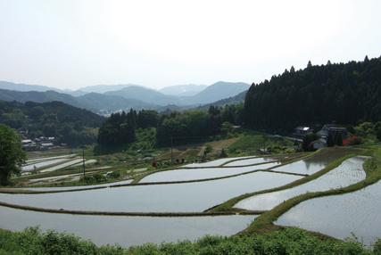 三草山 景観「長谷(ながたに)の棚田」下山道では、日本の棚田百選のひとつ、長谷の棚田を眺めながらの楽しいウォーキング