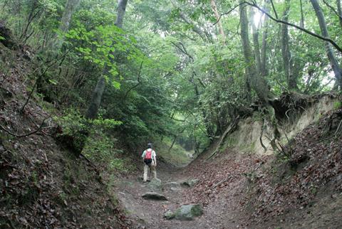 京都側の登山道のメインルート、雲母坂は樹林帯