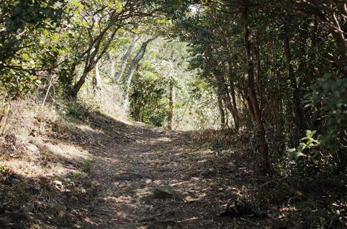 沼津アルプス 樹林帯も美しいこのコースでは、歩くごとに樹相が変わるのも魅力のひとつ