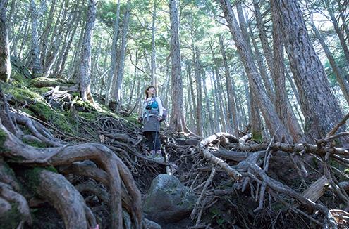 にゅう 北八の魅力のひとつが森歩き。深く息を吸って森の息吹を感じてみよう