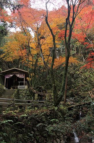 音羽山  鳴沢不動滝周辺の紅葉もみごと