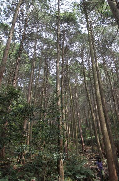 近江富士 裏登山道はコースが単調