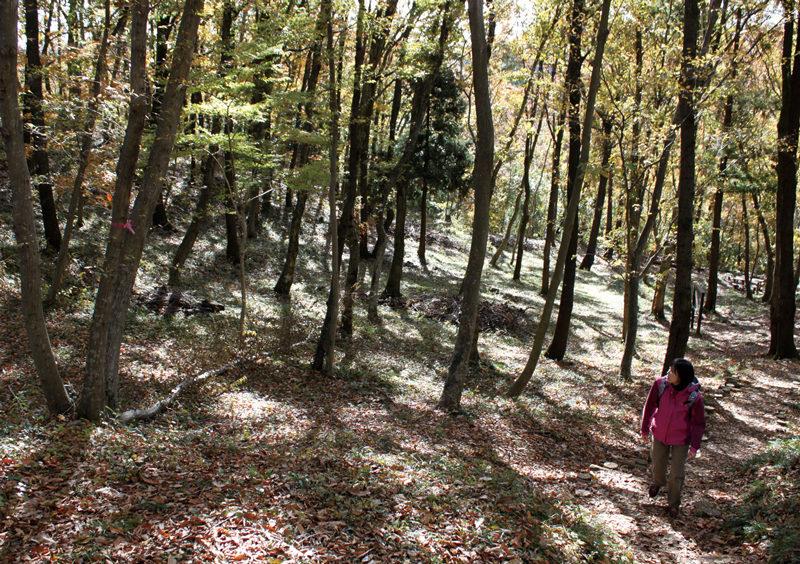 渋沢丘陵 震生湖付近の雑木林。冬の澄んだ木漏れ日が美しい