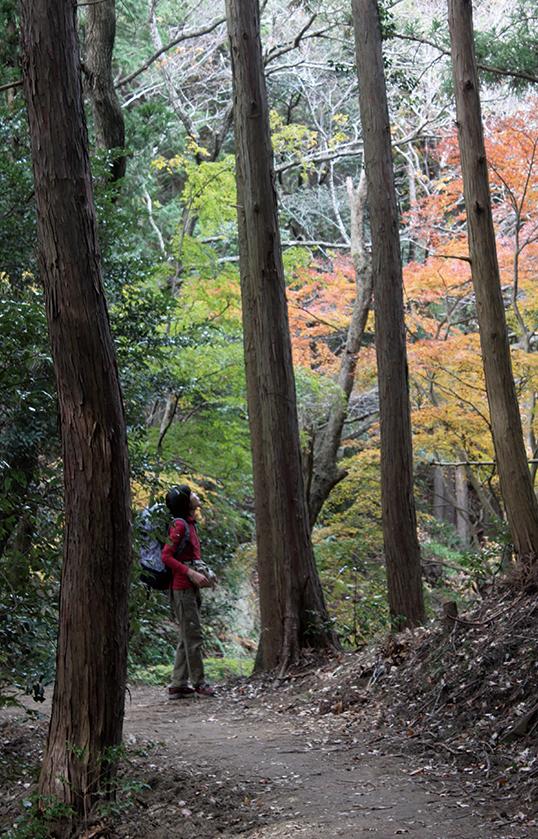 梅ヶ瀬渓谷 整備された道を歩く