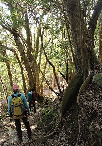 諭鶴羽山 緑濃い照葉樹林の中を歩いていく