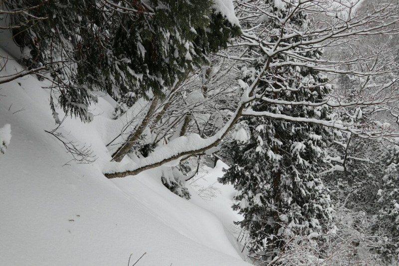 二ノ滝へ下る山道