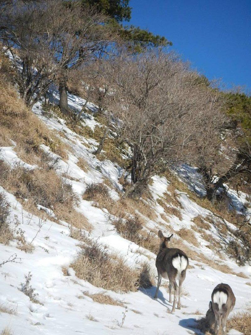 丹沢・花立山荘からの雪が残る登山道