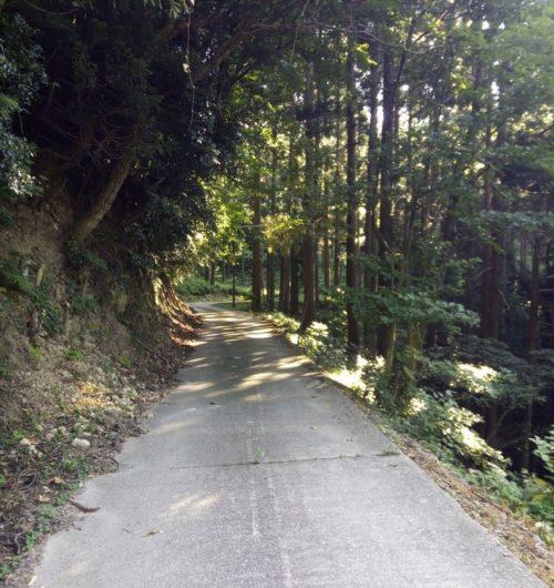 里山の舗装道路