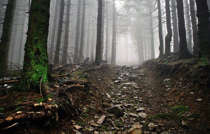 雨の日の登山イメージ